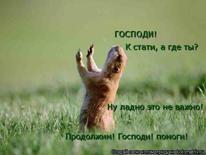 Котоматрица: Продолжим! Господи! помоги! Ну ладно это не важно! К стати, а где ты? ГОСПОДИ!