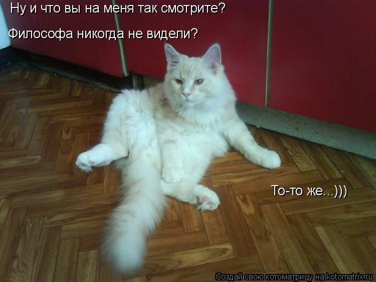 Котоматрица: Ну и что вы на меня так смотрите? Философа никогда не видели? То-то же...)))