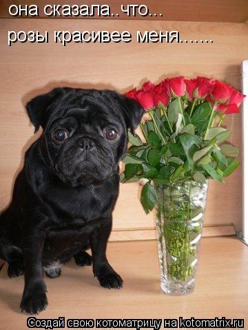 Котоматрица: она сказала..что...   розы красивее меня.......