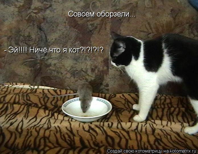 Котоматрица: Совсем оборзели...  - Эй!!!! Ничё что я кот?!?!?!?