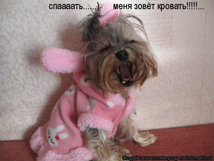 Котоматрица: спаааать......)      меня зовёт кровать!!!!!...