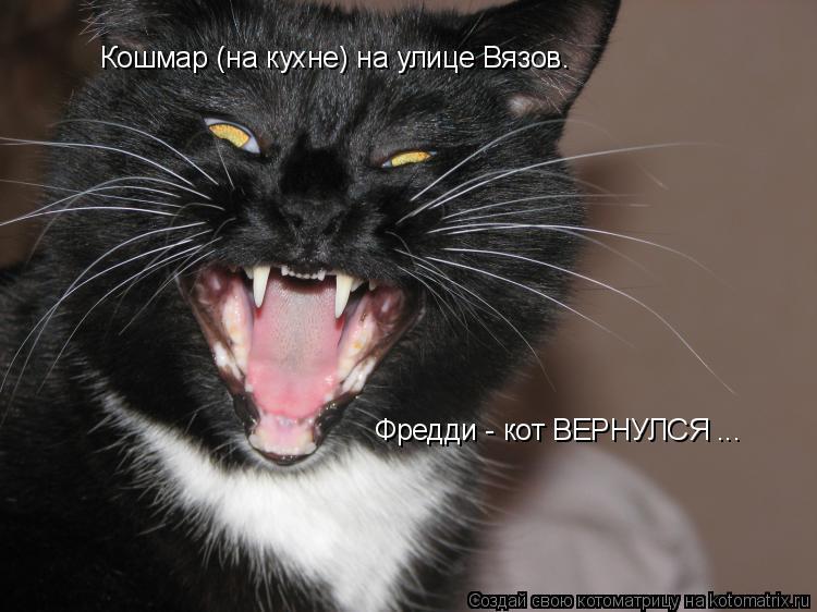 Котоматрица: Кошмар (на кухне) на улице Вязов. Фредди - кот ВЕРНУЛСЯ ...
