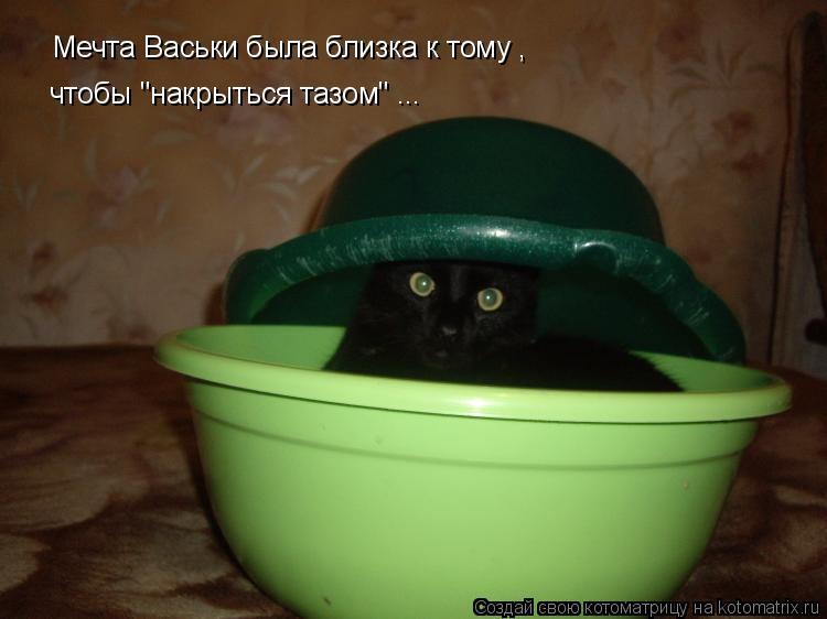 """Котоматрица: Мечта Васьки была близка к тому , чтобы """"накрыться тазом"""" ..."""