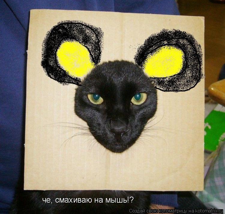 Котоматрица: че, смахиваю на мышь!?