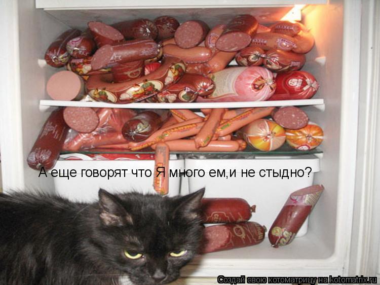 Котоматрица: А еще говорят что Я много ем,и не стыдно?