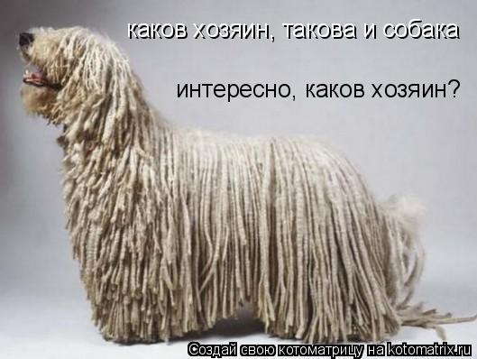 Котоматрица: каков хозяин, такова и собака интересно, каков хозяин?