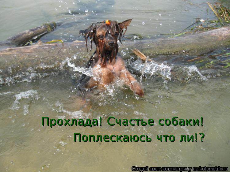 Котоматрица: Прохлада! Счастье собаки! Поплескаюсь что ли!?