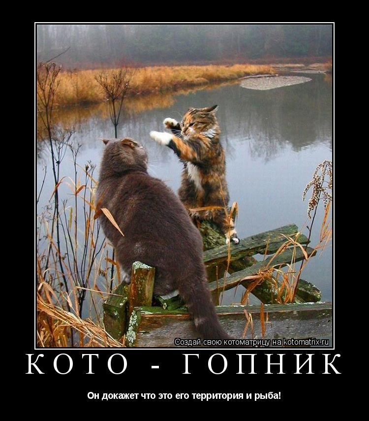 Котоматрица: Кото - гопник Он докажет что это его территория и рыба!