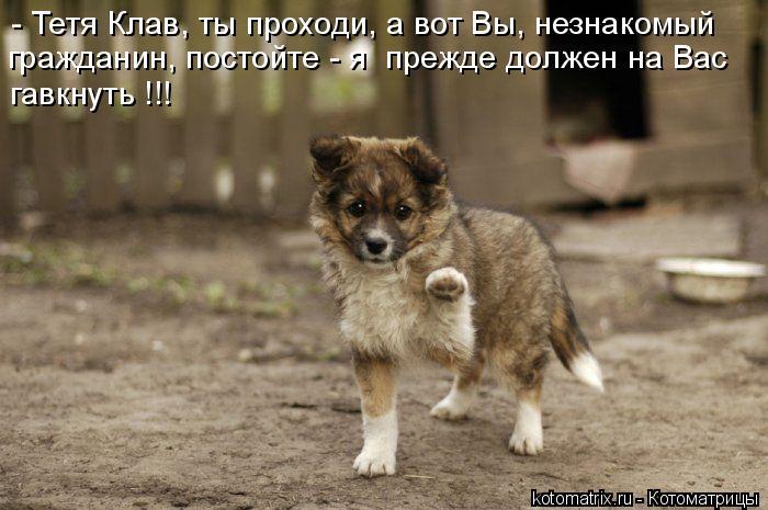 http://kotomatrix.ru/images/lolz/2010/11/16/738830.jpg
