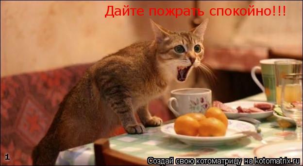 Котоматрица: Дайте пожрать спокойно!!!