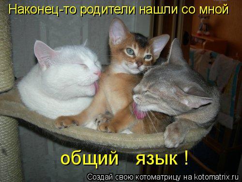 Котоматрица - Наконец-то родители нашли со мной общий   язык !