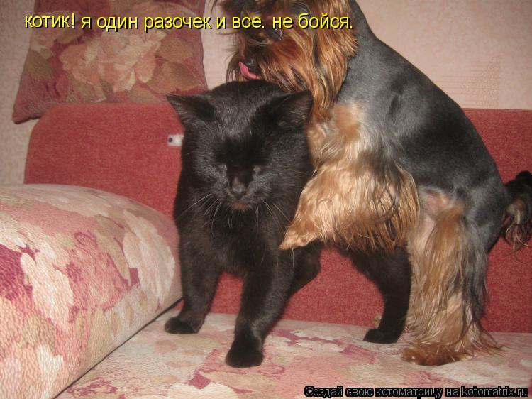 Котоматрица: котик  котик  ! я один разочек и все. не бойся.