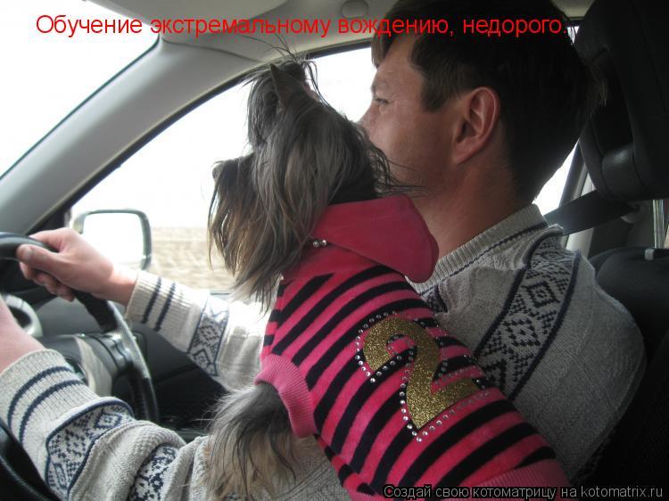 Котоматрица: Обучение экстремальному вождению, недорого.