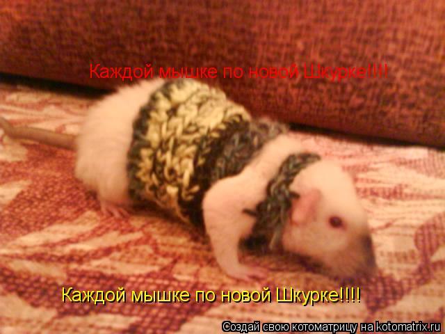 Котоматрица: Каждой мышке по новой Шкурке!!!! Каждой мышке по новой Шкурке!!!!
