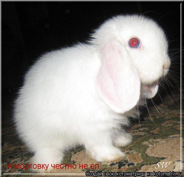 Котоматрица: я морковку честно не ел..................