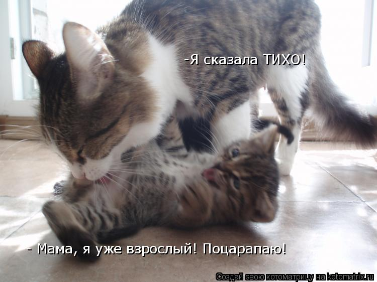 Котоматрица: - Мама, я уже взрослый! Поцарапаю! -Я сказала ТИХО!