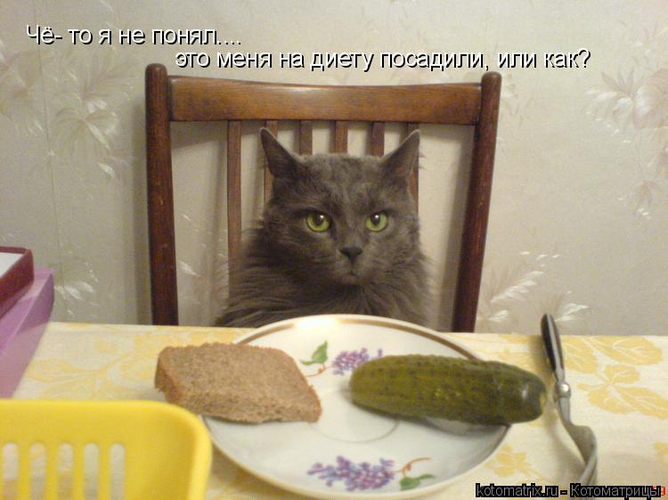 Котоматрица: Чё- то я не понял....  это меня на диету посадили, или как?