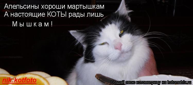 Котоматрица: Апельсины хороши мартышкам А настоящие КОТЫ рады лишь М ы ш к а м !