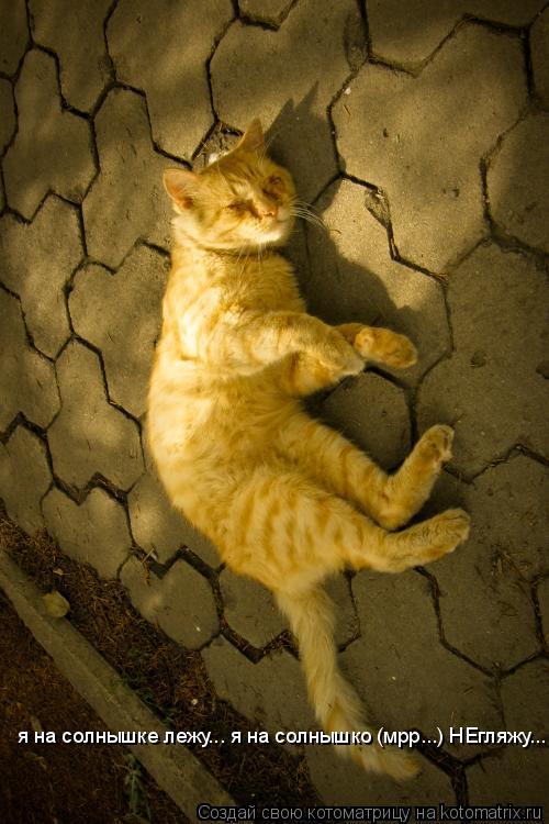 Котоматрица: я на солнышке лежу... я на солнышко (мрр...) НЕгляжу...