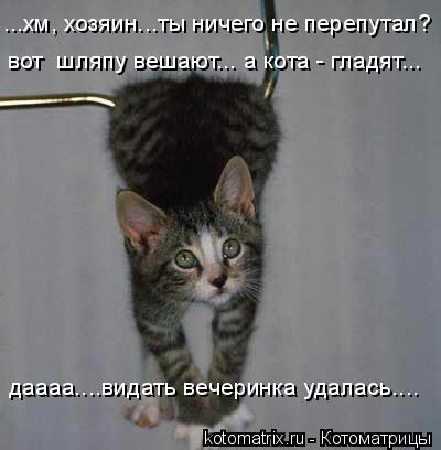 Котоматрица: ...хм, хозяин...ты ничего не перепутал? вот  шляпу вешают... а кота - гладят... даааа....видать вечеринка удалась....