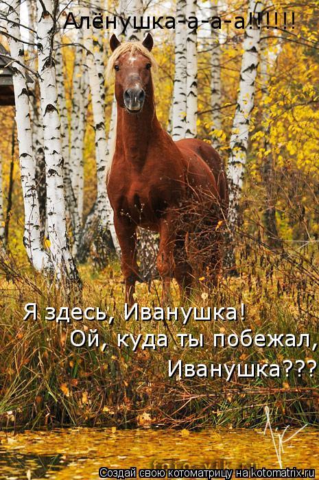 Котоматрица: Алёнушка-а-а-а!!!!!! Я здесь, Иванушка! Ой, куда ты побежал,  Иванушка???