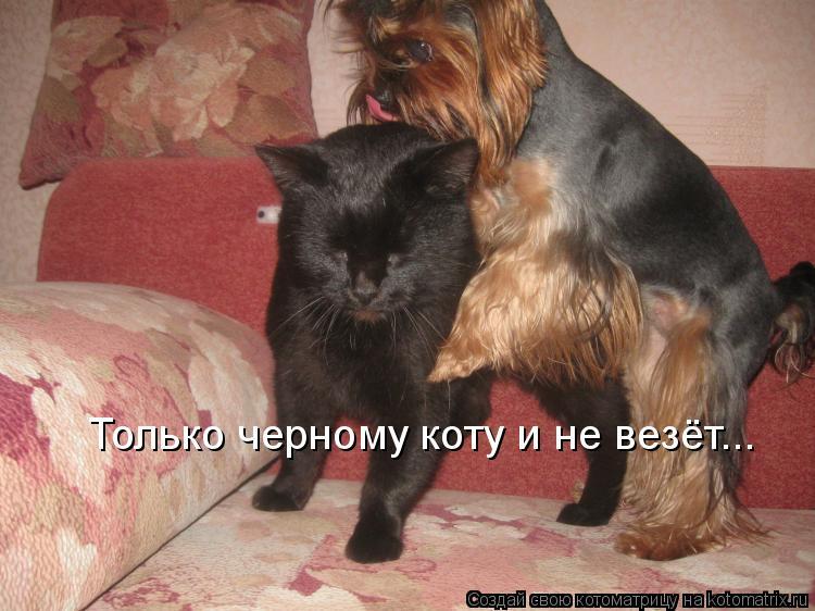 Котоматрица: Только черному коту и не везёт...