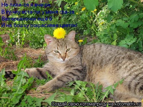 Котоматрица: На-пила-ся я вче-ра. В ку-чку вста-ли у меня гла-за Валерьяночки ещё б И на бошку покрасивее цветок!