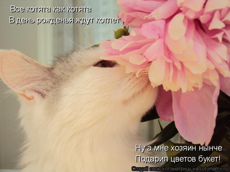 Котоматрица: Все котята как котята В день рожденья ждут котлет Ну а мне хозяин нынче Подарил цветов букет!