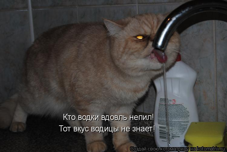 Котоматрица: Кто водки вдовль непил! Тот вкус водицы не знает!