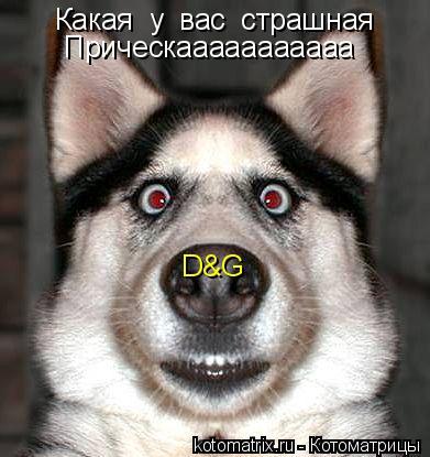 Котоматрица: Какая  у  вас  страшная Прическааааааааааа D&G