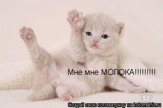Котоматрица: Мне мне МОЛОКА!!!!!!!!!