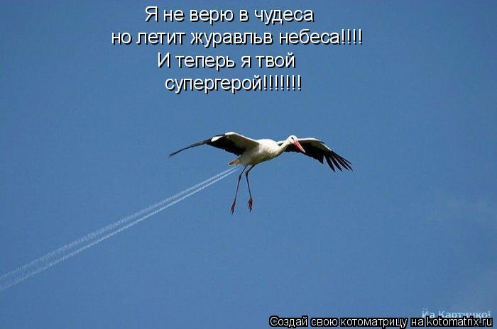 Котоматрица: Я не верю в чудеса но летит журавльв небеса!!!! И теперь я твой супергерой!!!!!!!