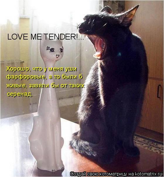 Котоматрица: LOVE ME TENDER!... Хорошо, что у меня уши фарфоровые, а то были б живые, завяли бы от таких серенад.