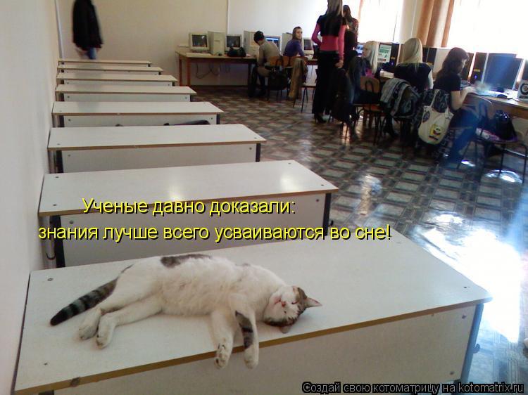 Котоматрица: Ученые давно доказали: знания лучше всего усваиваются во сне!