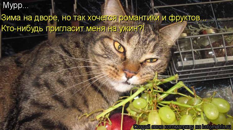 Котоматрица: Мурр... Зима на дворе, но так хочется романтики и фруктов... Кто-нибудь пригласит меня на ужин?!