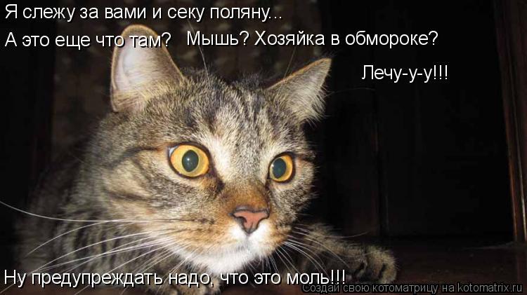 Котоматрица: Я слежу за вами и секу поляну... А это еще что там? Мышь? Хозяйка в обмороке? Лечу-у-у!!! Ну предупреждать надо, что это моль!!!