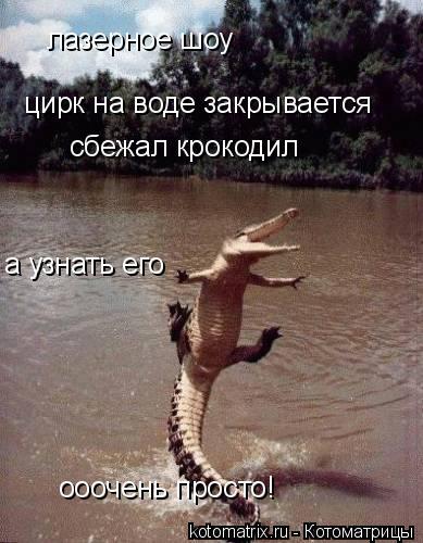 Котоматрица: лазерное шоу  цирк на воде закрывается сбежал крокодил а узнать его  ооочень просто!