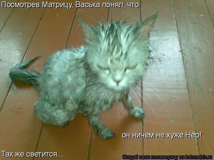 Котоматрица: Посмотрев Матрицу, Васька понял, что он ничем не хуже Нео! Так же светится...