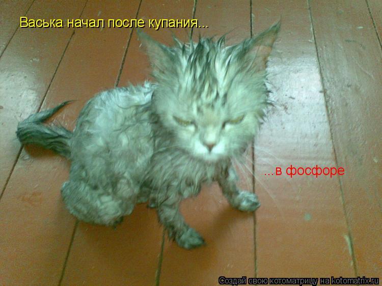 Котоматрица: Васька начал после купания... ...в фосфоре