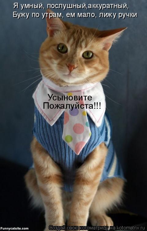 Котоматрица: Я умный, послушный,аккуратный, Бужу по утрам, ем мало, лижу ручки Усыновите Пожалуйста!!!