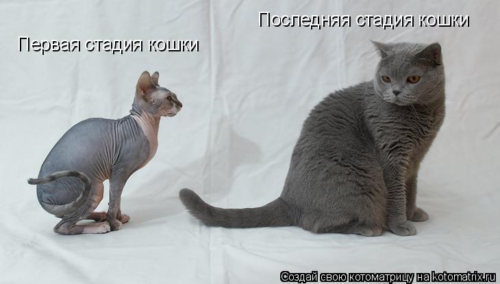 Котоматрица: Первая стадия кошки Последняя стадия кошки