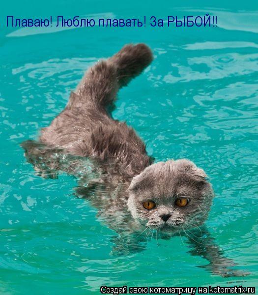 Котоматрица: Плаваю! Люблю плавать! За РЫБОЙ!!