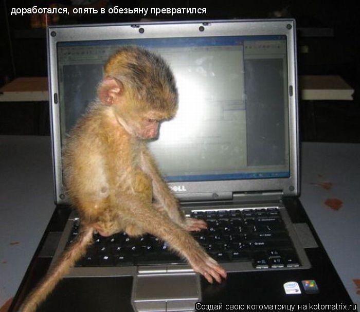 Котоматрица: доработался, опять в обезьяну превратился