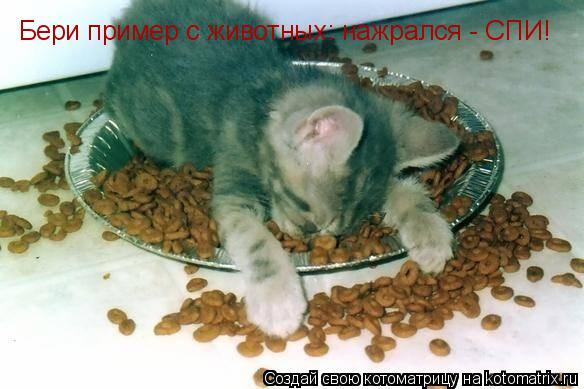 Котоматрица: Бери пример с животных: нажрался - СПИ!