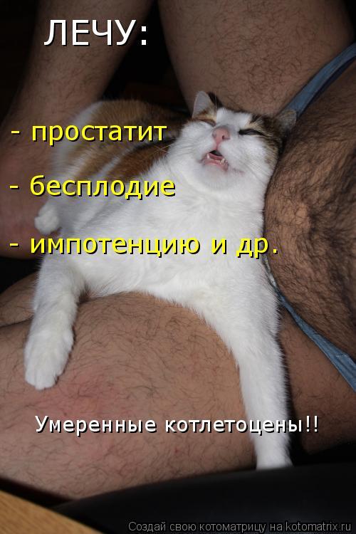 Котоматрица: ЛЕЧУ: - простатит - бесплодие - импотенцию и др. Умеренные котлетоцены!!
