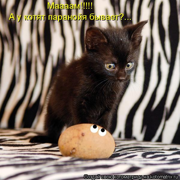 Котоматрица: Маааам!!!!! А у котят паранойя бывает?...