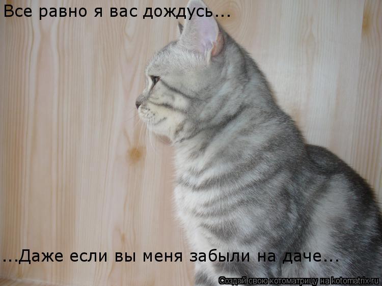 Котоматрица: Все равно я вас дождусь... Все равно я вас дождусь... ...Даже если вы меня забыли на даче...