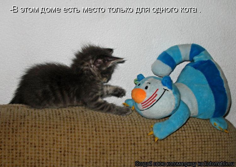 Котоматрица: -В этом доме есть место только для одного кота .