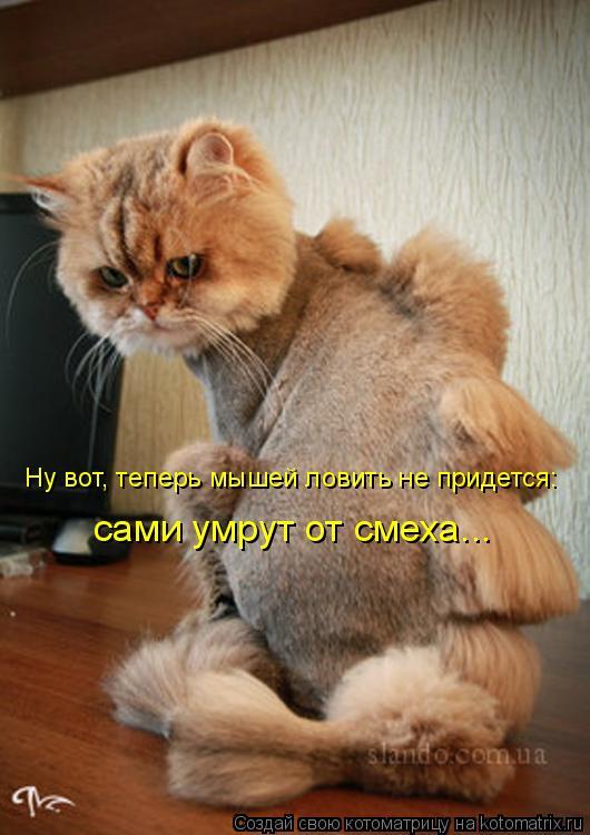 Котоматрица: Ну вот, теперь мышей ловить не придется: сами умрут от смеха...