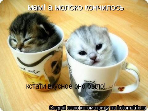 Котоматрица: мам! а молоко кончилось  кстати вкусное оно было!